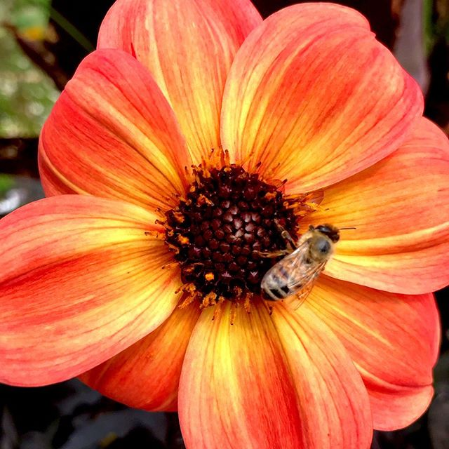 Bee 🐝 sure to have your garden tended to by professionals! Our team is the same for you every week, allowing you to get to know your crew (and they get to know your garden!) . . . . . . . #professionalgardener #gardeners #gardening #gardendesign #bee #beesofinstagram #flower #flowerstagram #flowersofinstagram #plants #plantingseeds #horticulture #gardenlove #greenthumb #nature