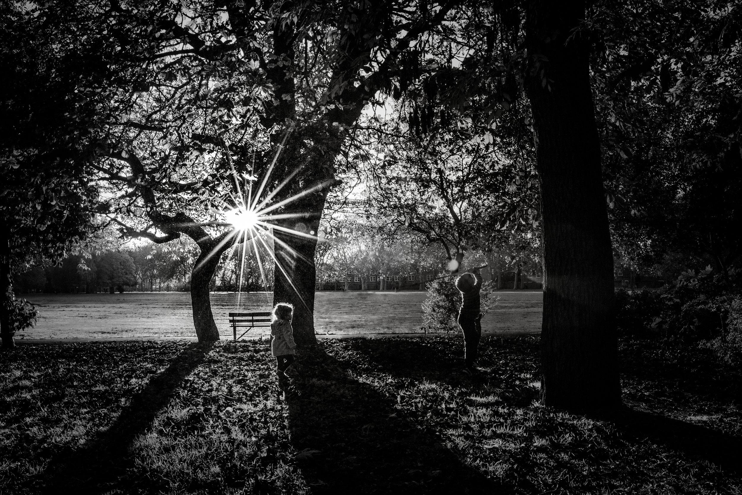 Sunflair Victoria Park Autumn 06.jpg
