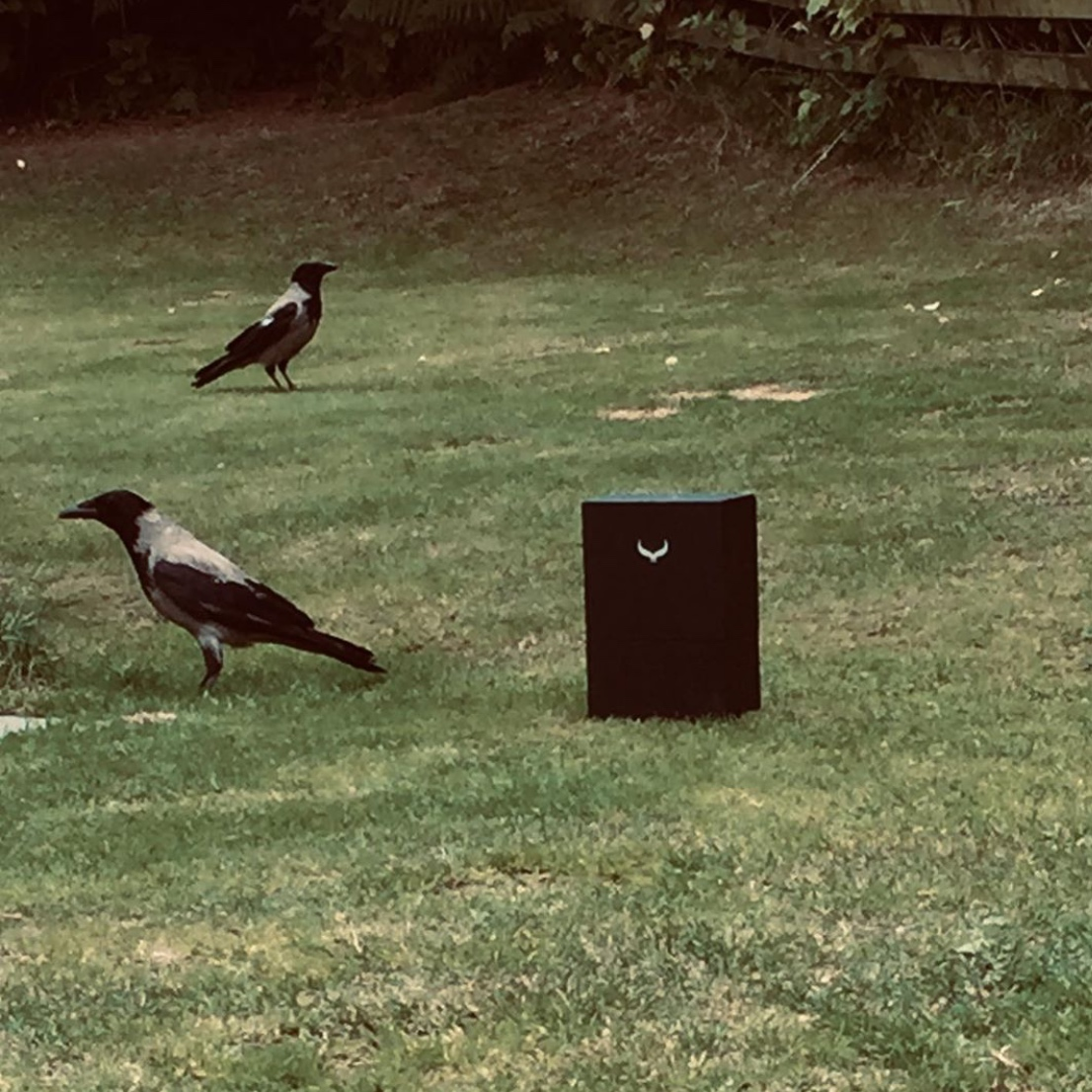 Crows and box