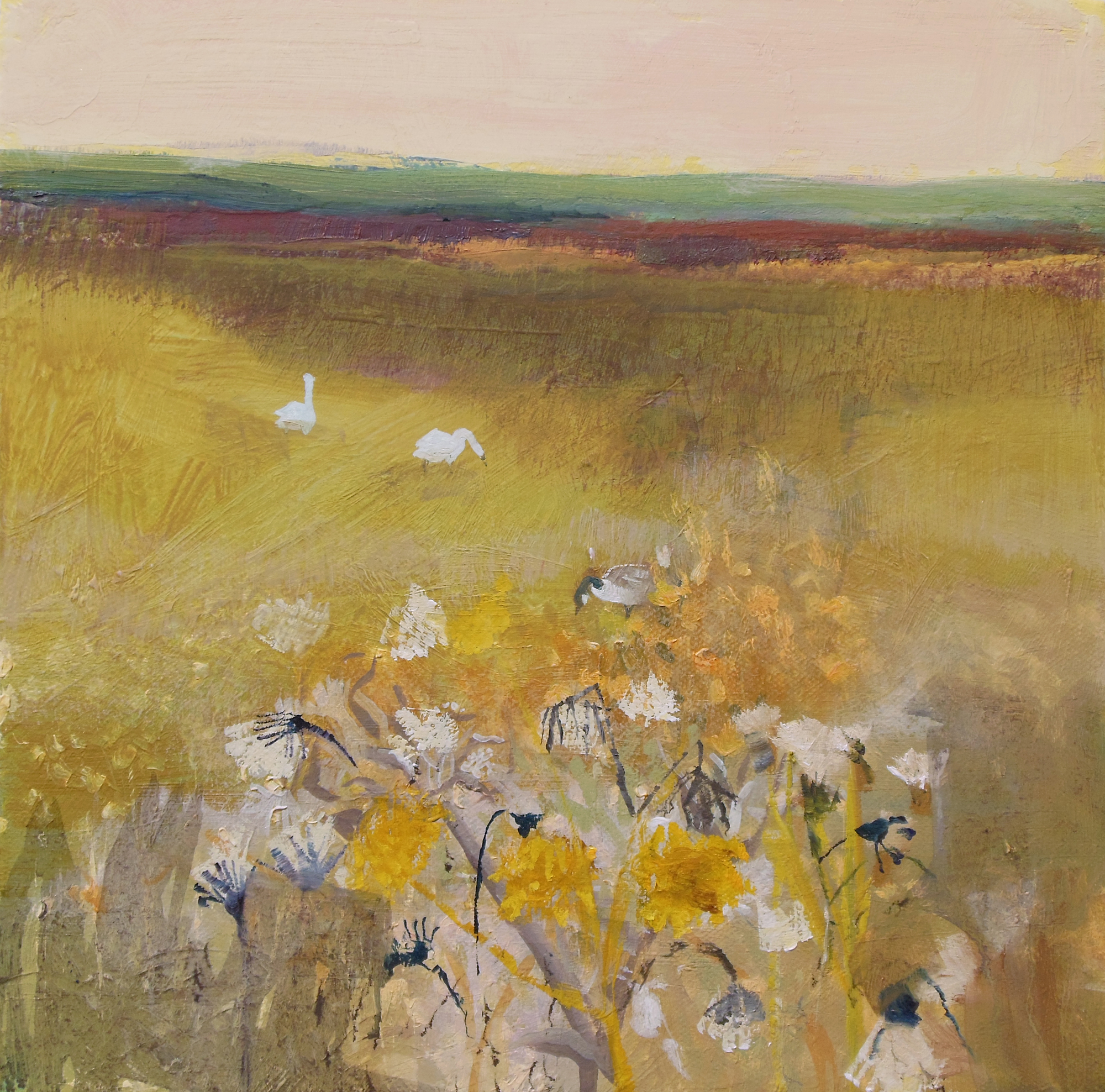 Sow Thistle and Swans, Otmoor, oil on canvas, 300mm x 300mm...jpg