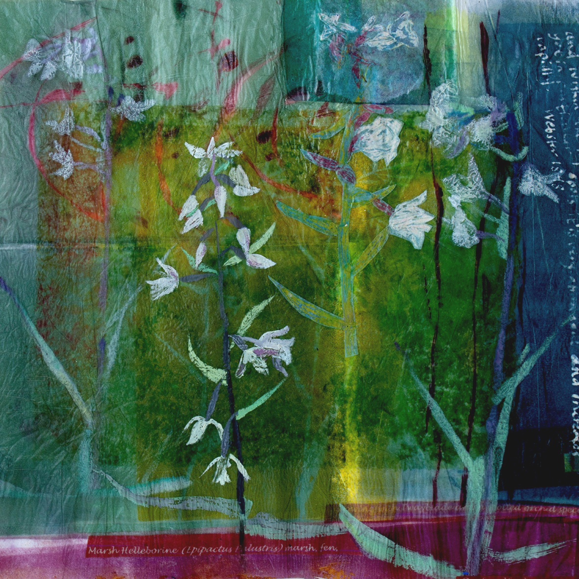 'in watery places' (Marsh Helleborine and Twayblade) mixed media print techniques