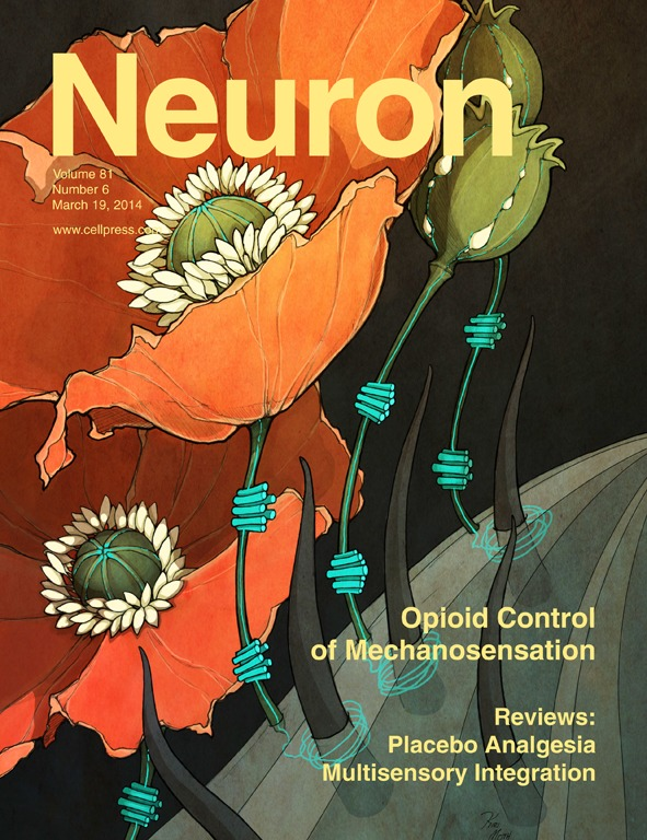 Bardoni_Neuron_2014.jpg