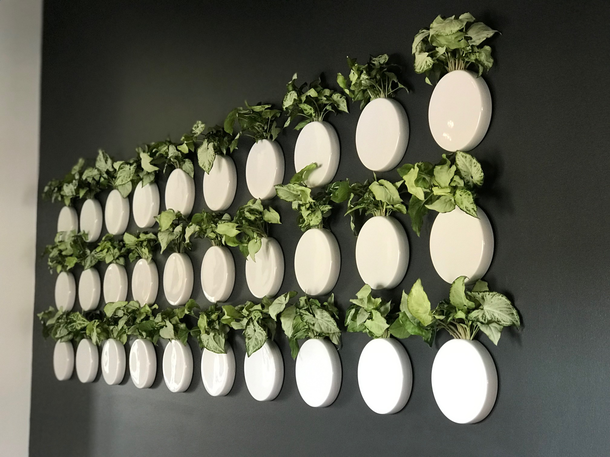 Commercial Installations - I will work with you to design & create a plant installation to suit your business. I also offer maintenance packages.Previous Installations include:- BIG Cork Vineyards, Maryland