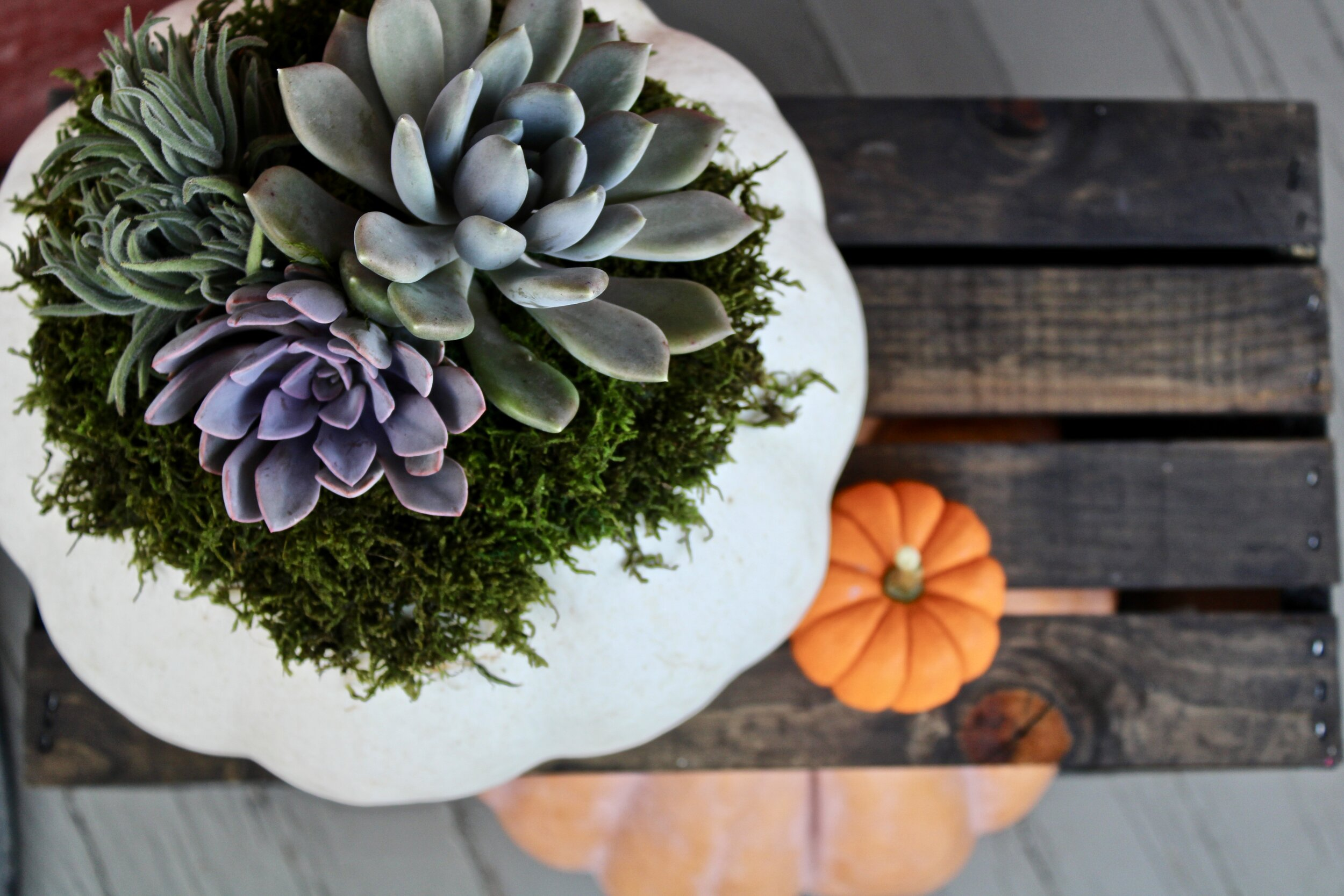 Custom arrangements - Fall is finally here & the succulents are huge! Check out my latest & greatest creations.