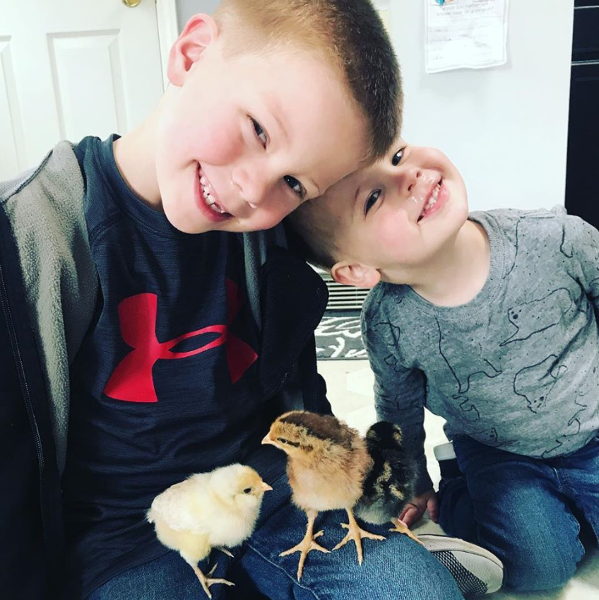Picture of my two boys with three baby chickens in their laps.