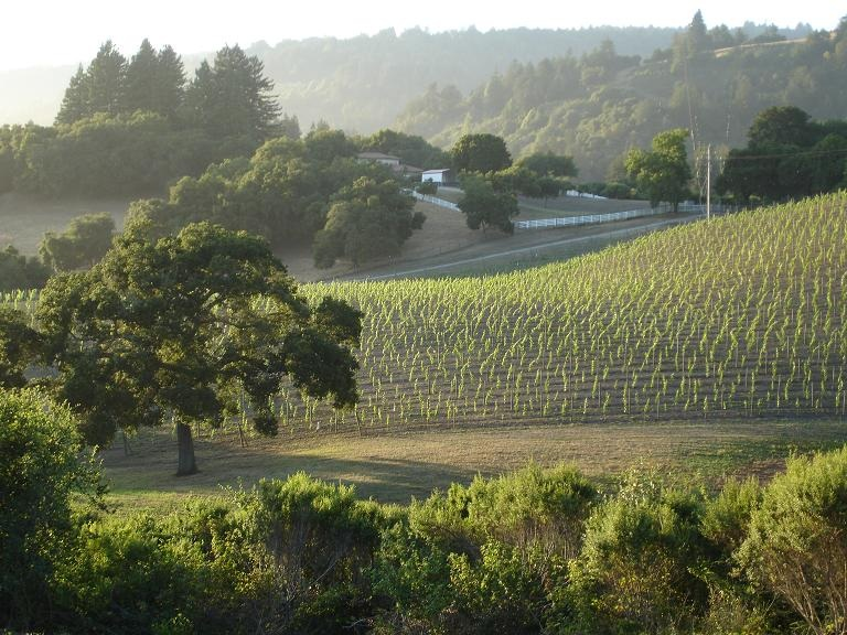 Vineyard+%26+Oak+Tree+7-13-09.jpg
