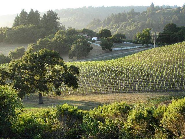 Happy grapes come from California 🍇 #pinotnoir #santacruz #winery #lasnietas