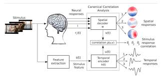 Stimulus-Response Correlation of EEG - This methods can identify what the brain encodes about the stimulus while simultaneously decoding the corresponding brain activity. It is a component extraction technique that works in the absence of precise time markers. We use this to understand the EEG responses to unique experiences, such as video games.