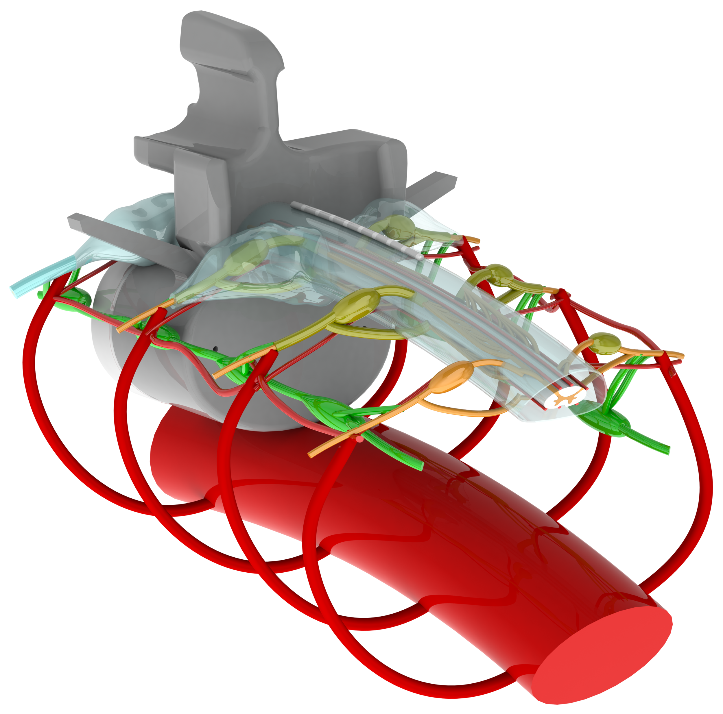 Realistic Anatomically Detailed Open-source Spinal Cord Stimulation (RADO SCS) Model - An Open-source resources for downloading RADO SCS model for computational modeling of SCS, tsDCS, DRGS, etc.