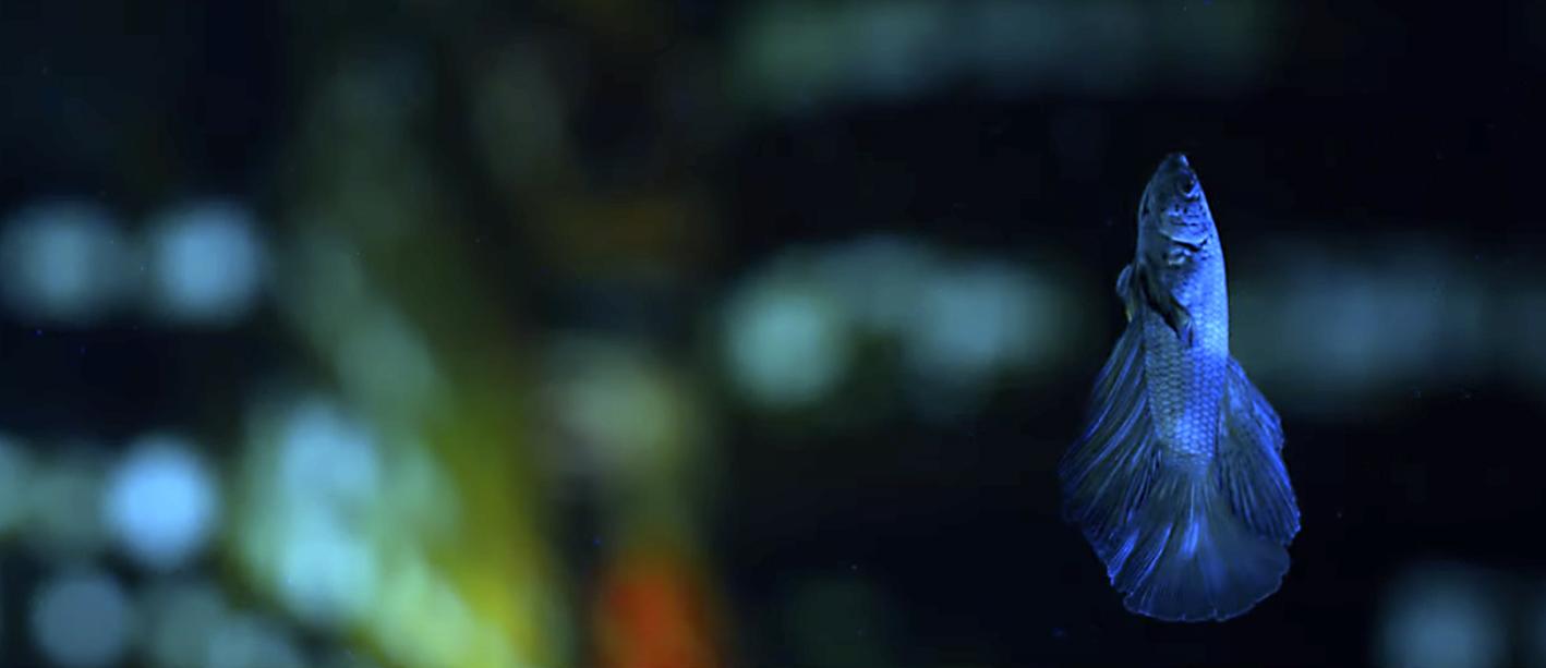 fish uv light with rosco backdrop clean.jpg