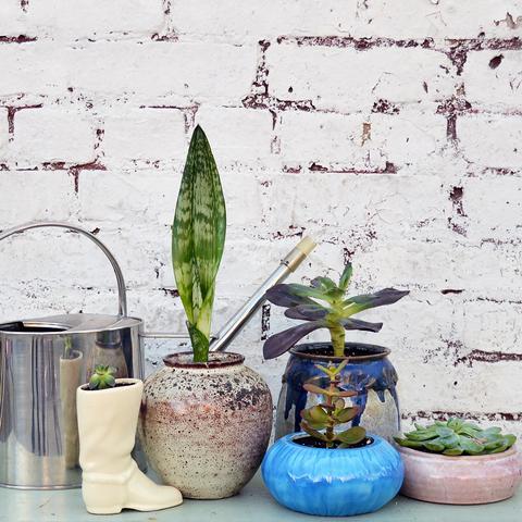 succulents-vintage-planters.jpg