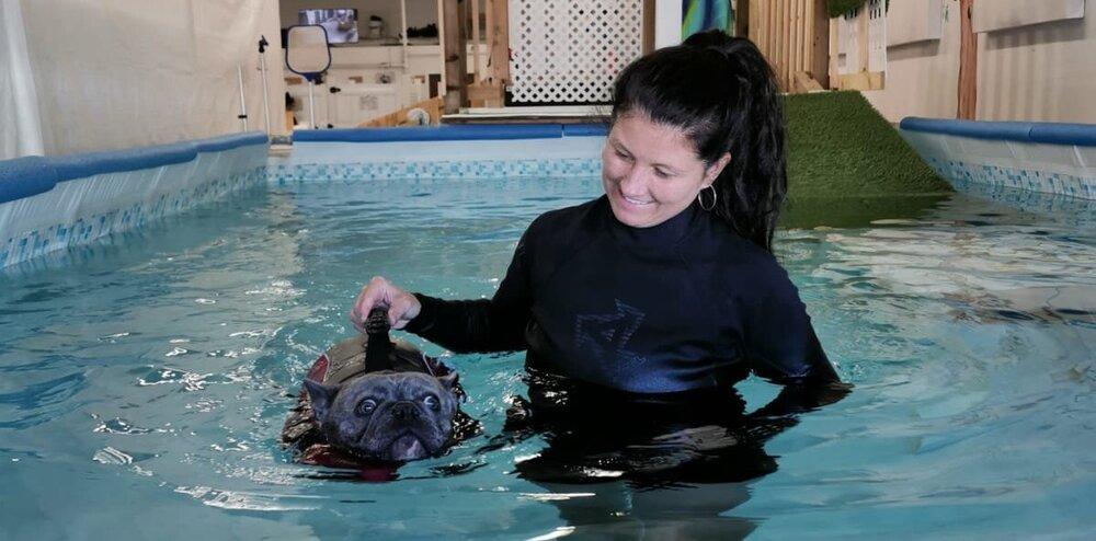 swim at whl.dog recreational dog swim