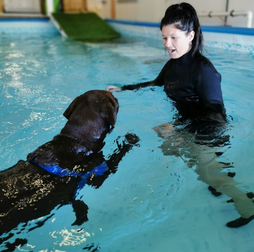 canine pool therapy swim at watsons - Ellie