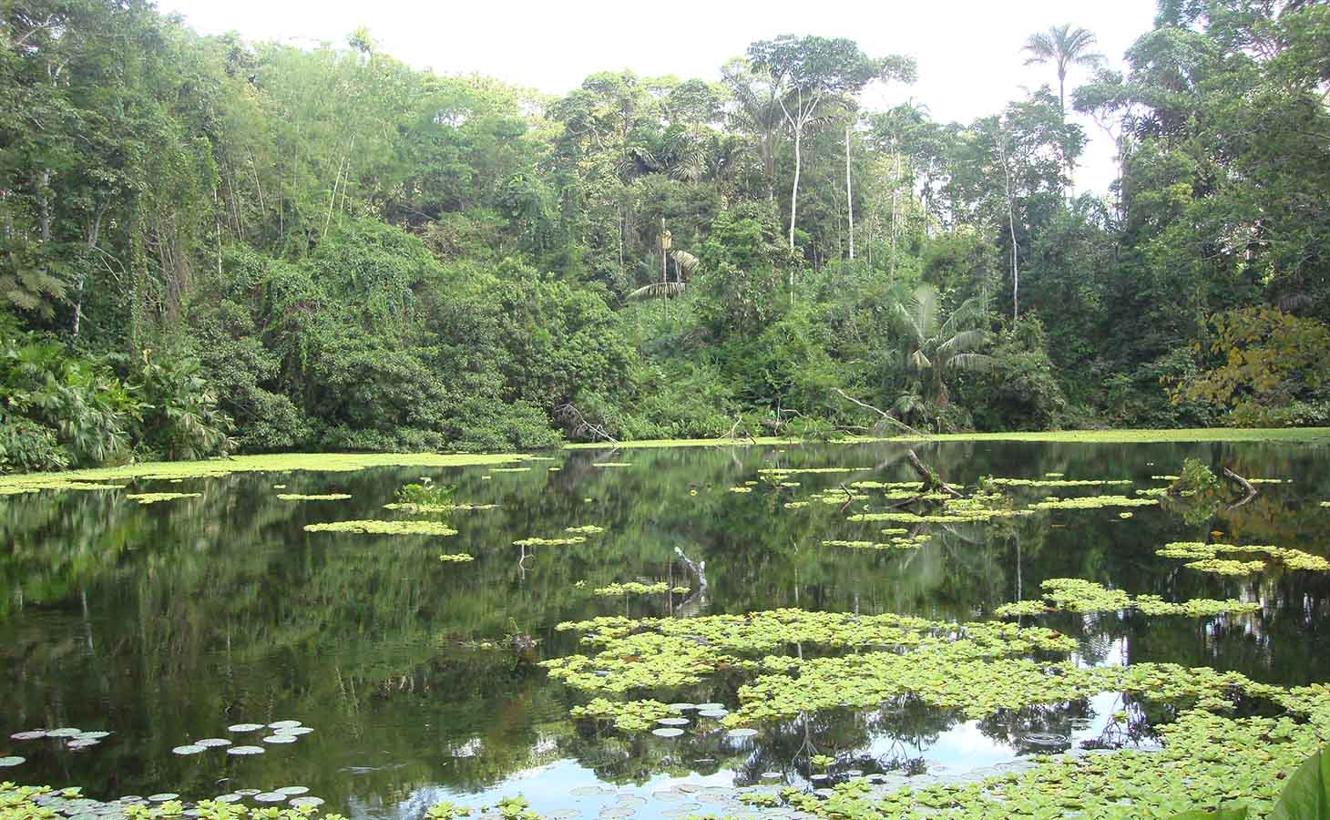 Places you can't miss - The Amazon Rainforest is one of the most biodiverse regions in the world. In Ecuador, this region is just about two hours from Quito, so it's easy to reach. Choose the places you prefer, and plan your trip to the adventure.