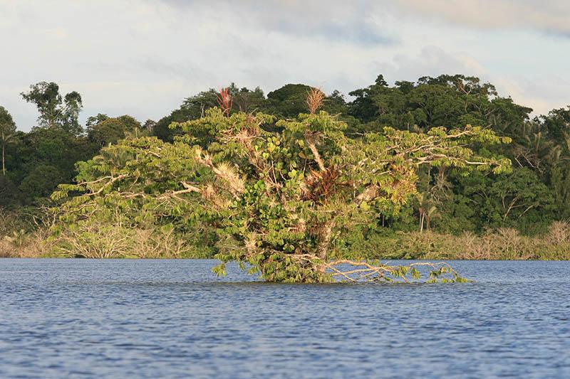 Cuyabeno National Park Ecuador1.jpg