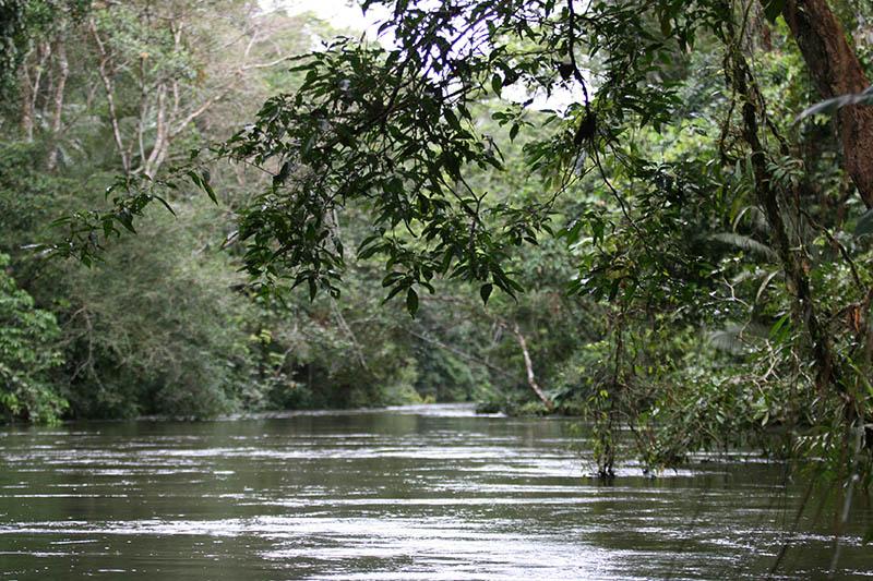 Cuyabeno National Park Ecuador3.jpg
