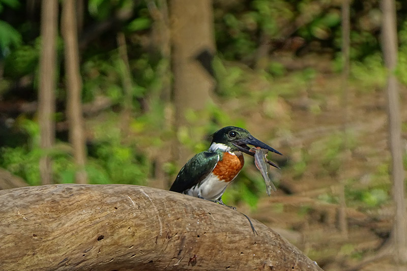 Birdwatching in the Amazon of Ecuador3.jpg