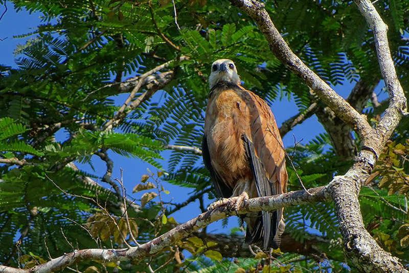 Birdwatching in the Amazon of Ecuador4.jpg