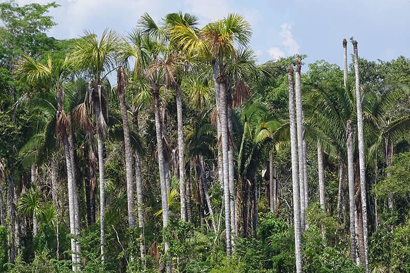 Amazon Rainforest Flora1.jpg