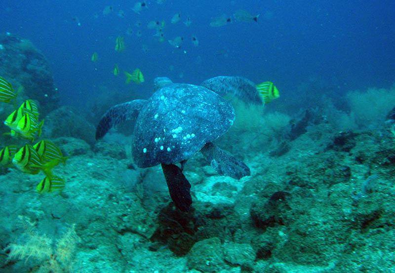 Galapagos Snorkeling2.jpg