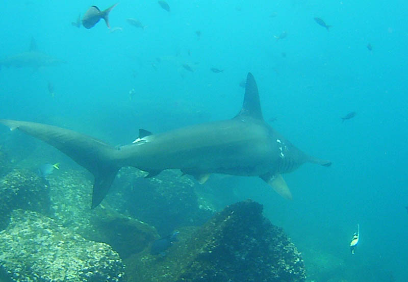 Diving in the Galapagos Islands2.jpg