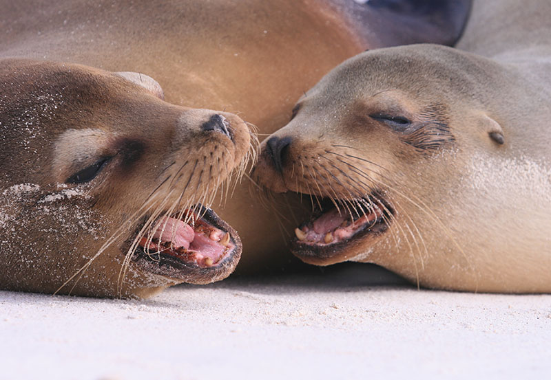 Galapagos Wildlife1.jpg