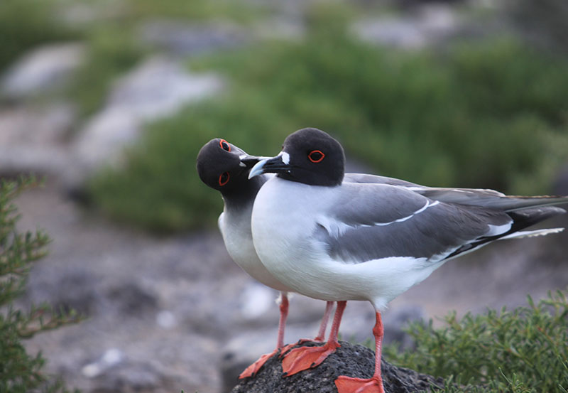 Galapagos Wildlife2.jpg