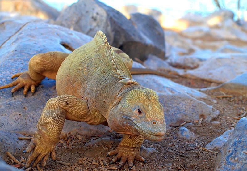 Galapagos Wildlife3.jpg