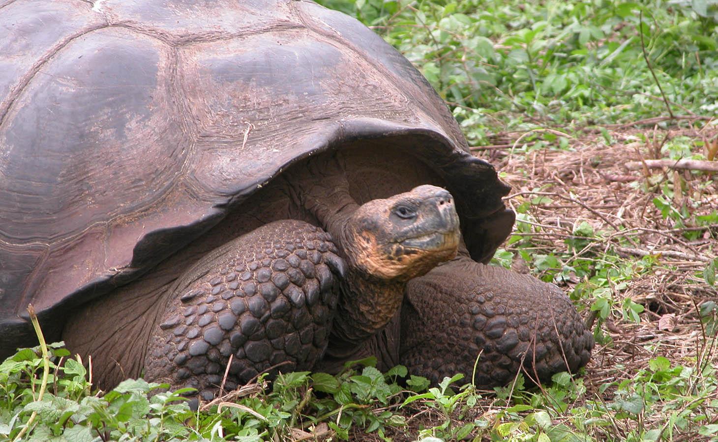 Galapagos Wildlife -