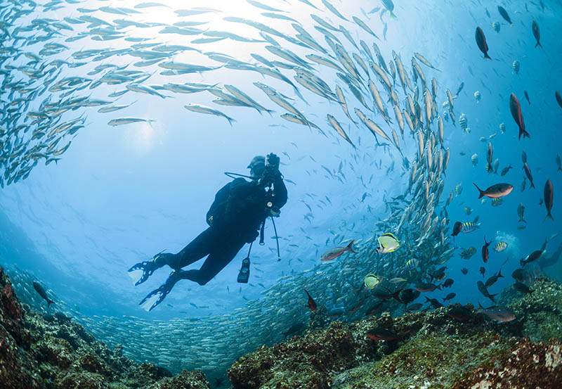 Diving - Ecuador is also home to some of the most beautiful marine life in the world. Divers love to explore the popular underwater destinations where they can find underwater cliffs, various types of coral, and more. Diving