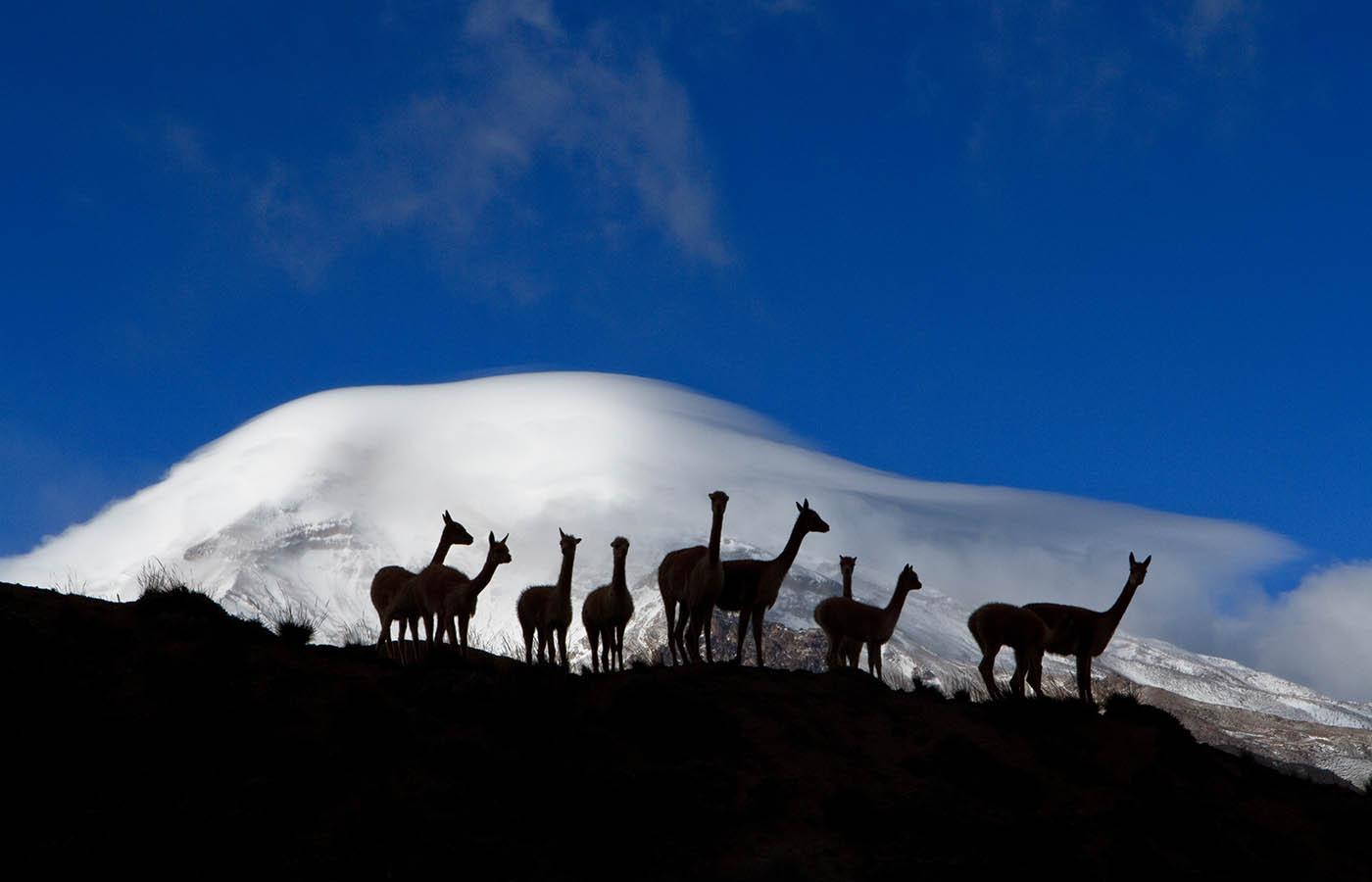 Chimborazo -