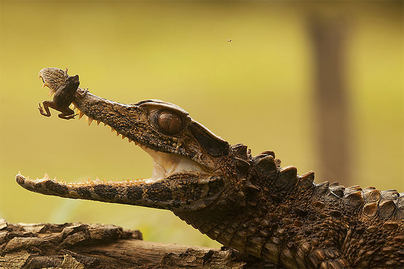 Yasuni National Park -