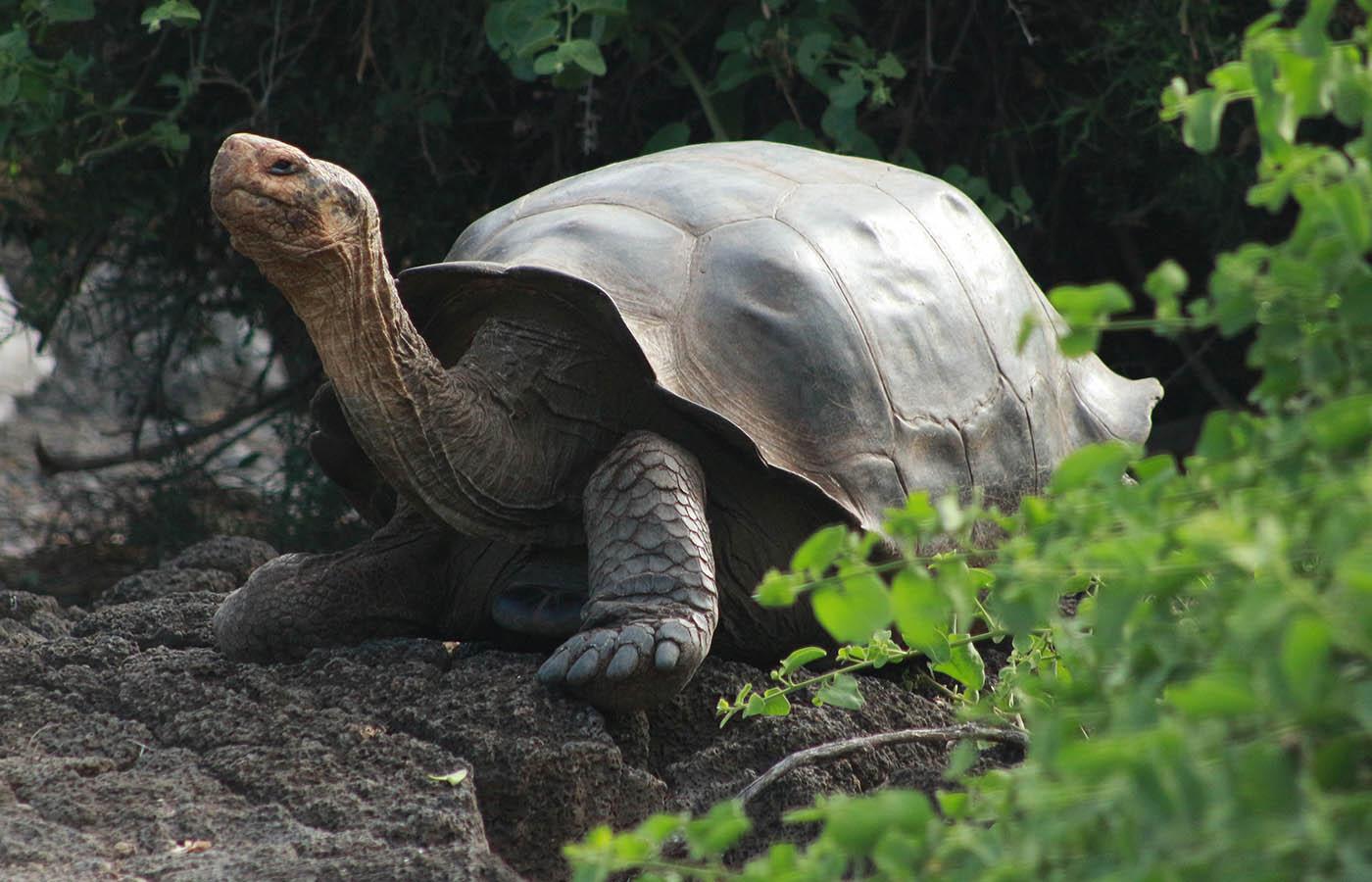 Galapagos National Park -