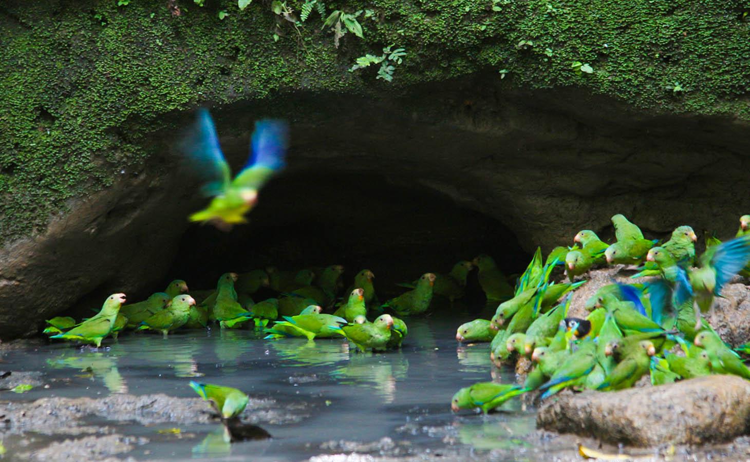 The Amazon Rainforest -