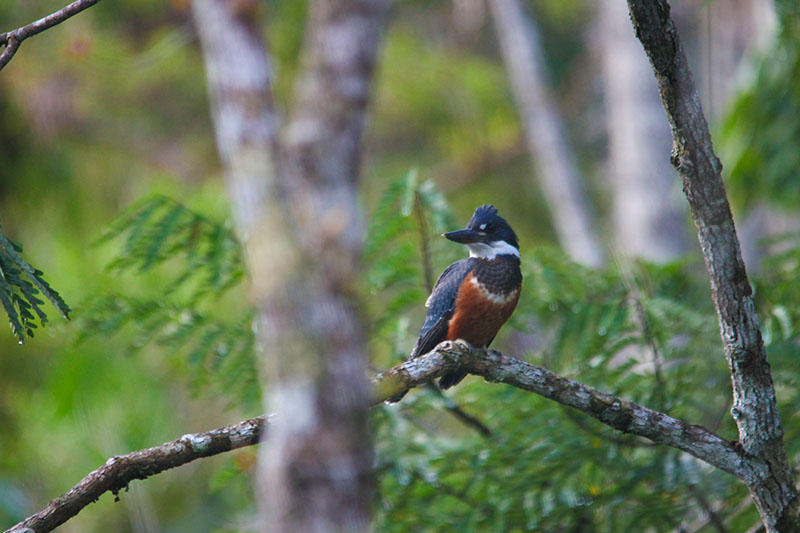 Amazon Birdwatching -