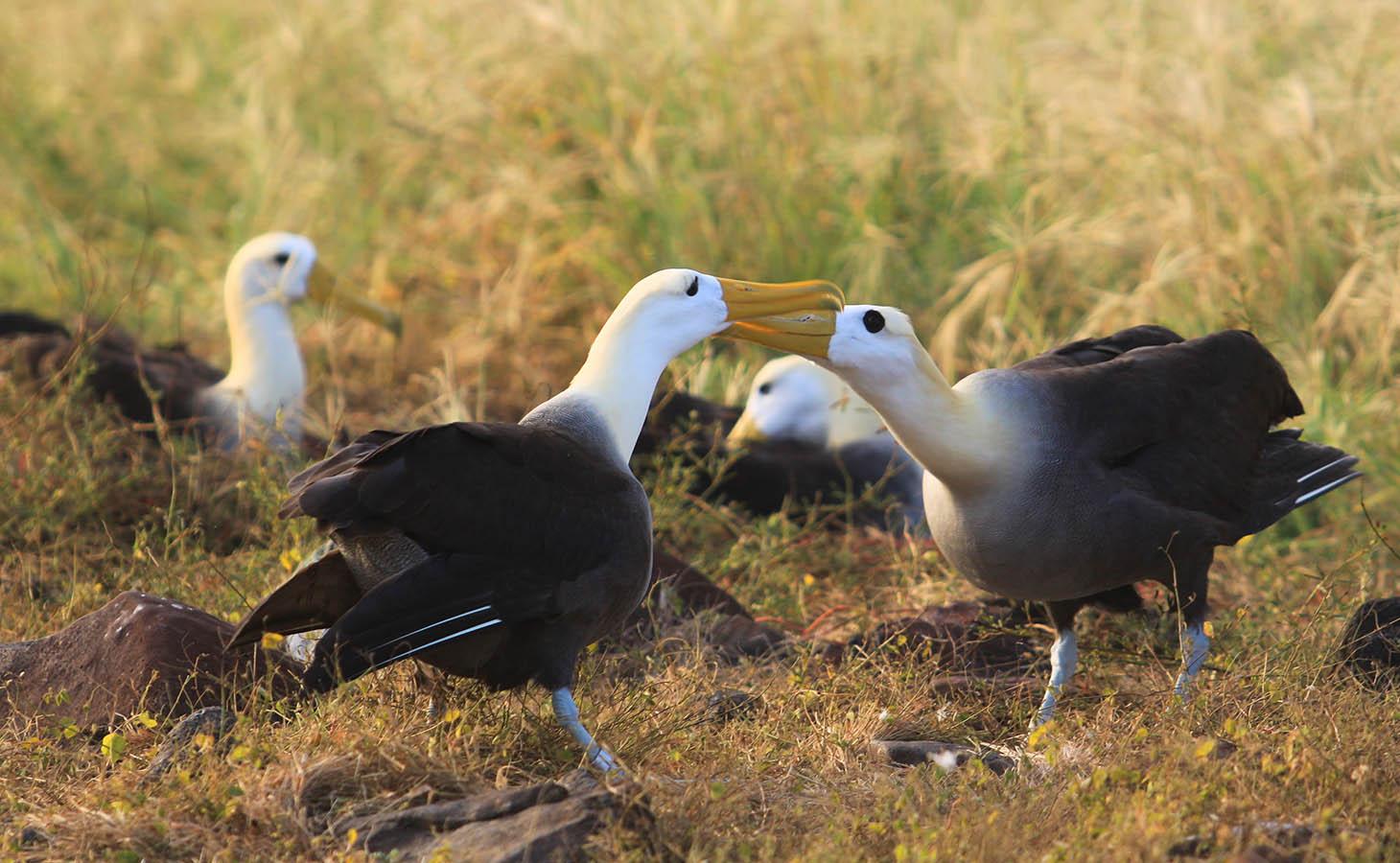 Galapagos Islands -
