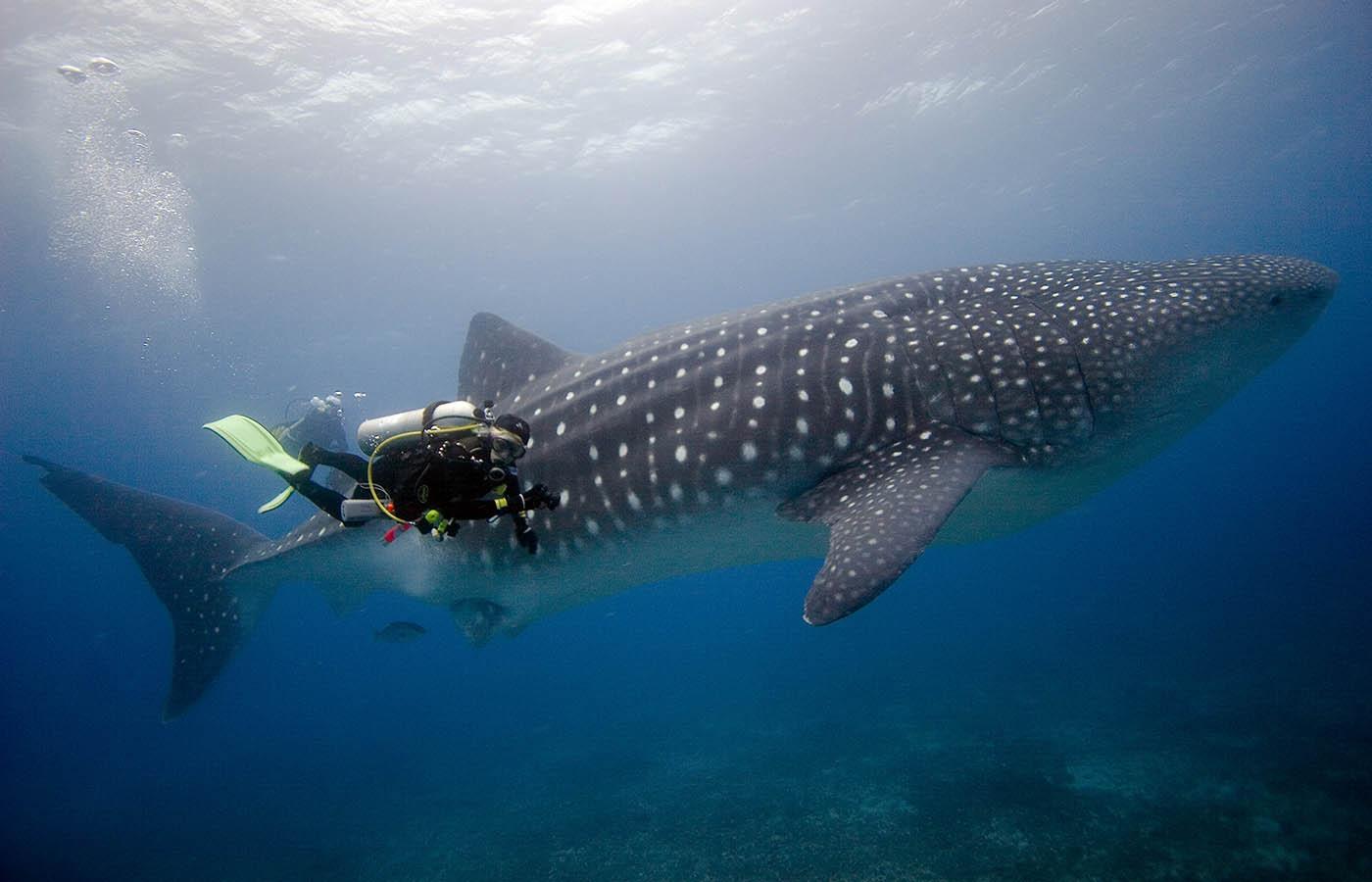 Galapagos Diving.jpg