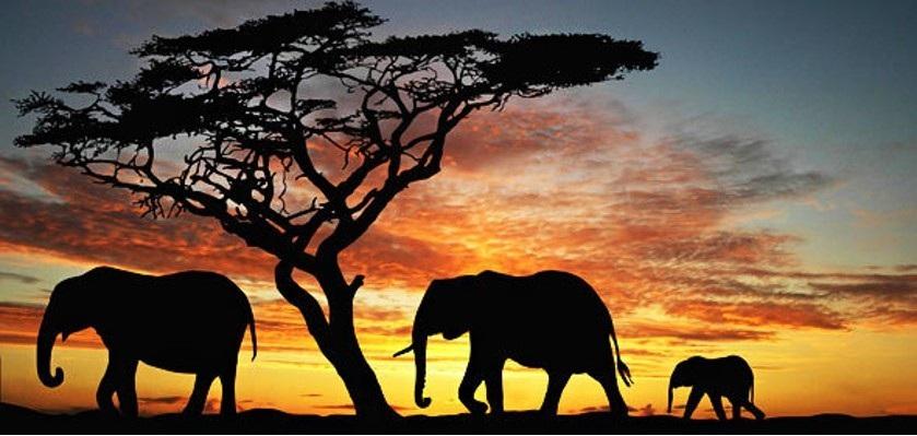 elephants+kenyaa.jpg