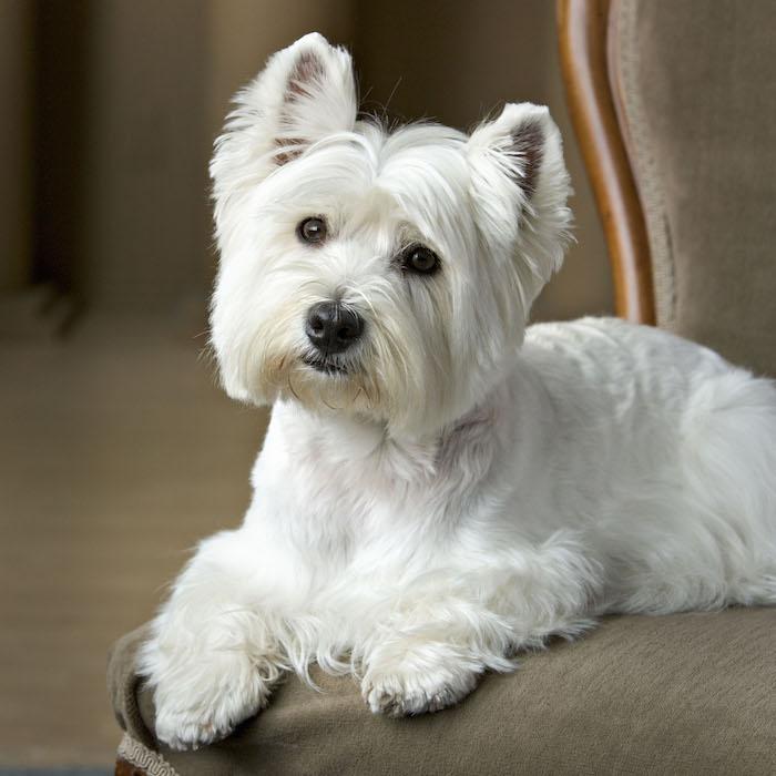 roofus-sitstaylearn-ontario-dog-training.jpg