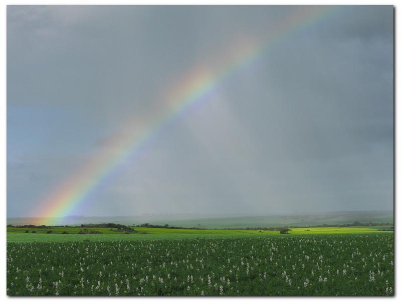 AFIM Rainbow.jpg