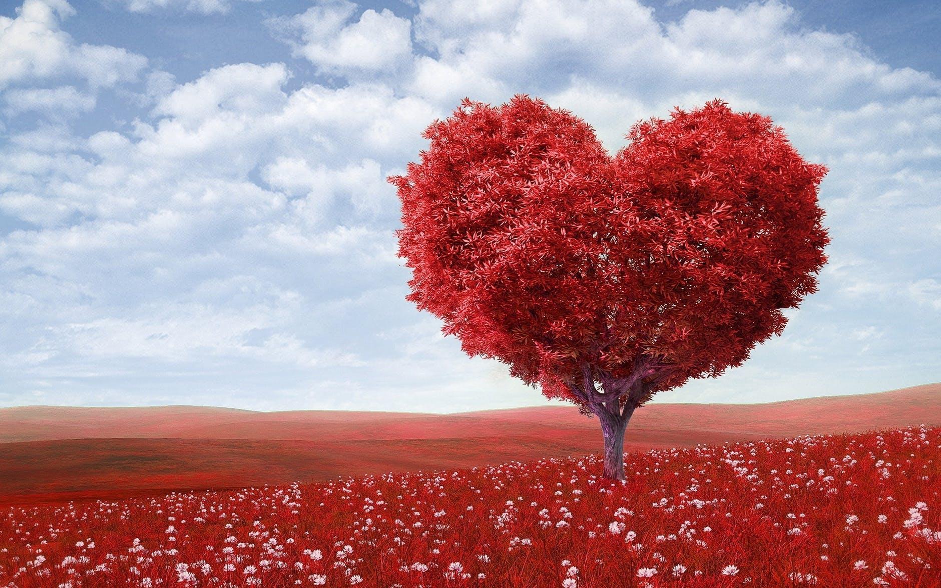 Red heart tree.jpeg