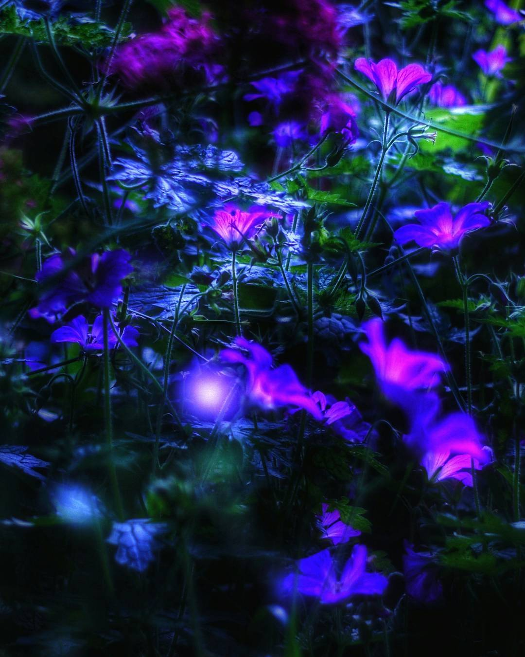 nightblossoms[1].jpg