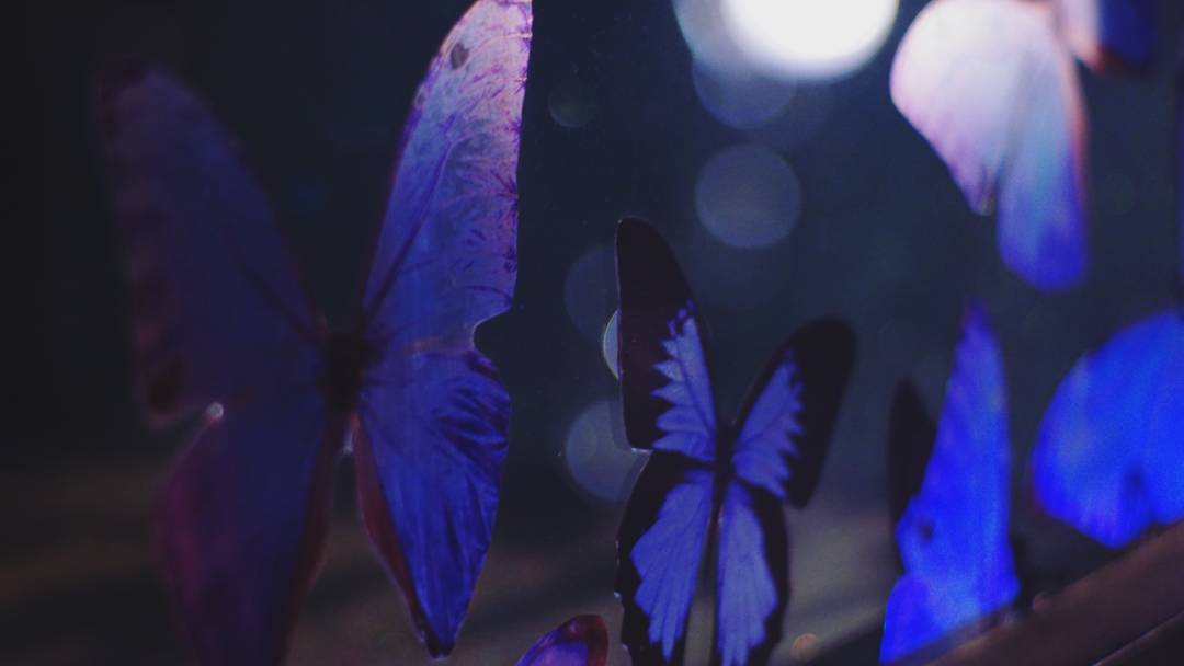 butterfly_effect[1].jpg