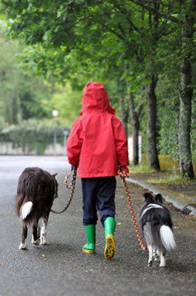marche-en-laisse-education-canine-gap.jpg