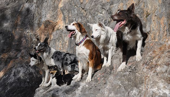 cours-collectif-education-canine-hautes-alpes.jpg