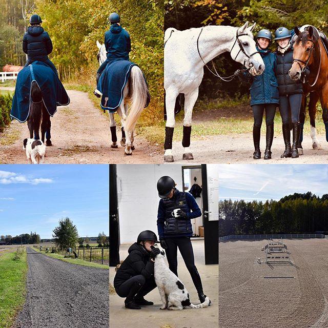 Vi har två lediga tjänster i teamet !  Vi söker två personer till vårat team, en av tjänsterna innebär  att följa med mycket på tävling och ta hand om hästarna. Den andra innefattar mer ridning samt arbete hemma med hästarna. Om du är intresserad  maila på izawallin@outlook.com 😊🐴