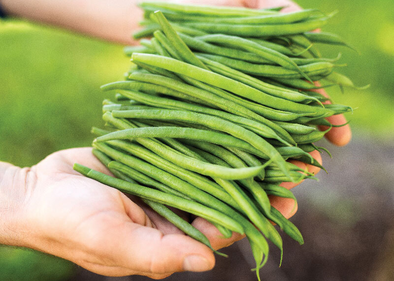 Alpine-Fresh-French-Beans_800px.jpg