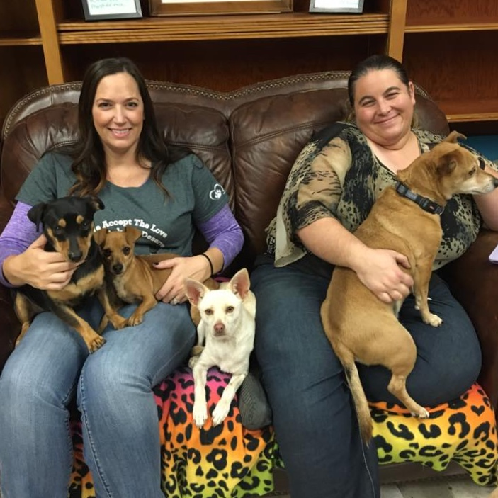 Wallflower Warriors are a special group of friends coming together to encourage and love our more timid dogs. We would love for you to join us. Wednesday evenings at 6pm. Contact wendy@animalcompassionteam.com for more information.