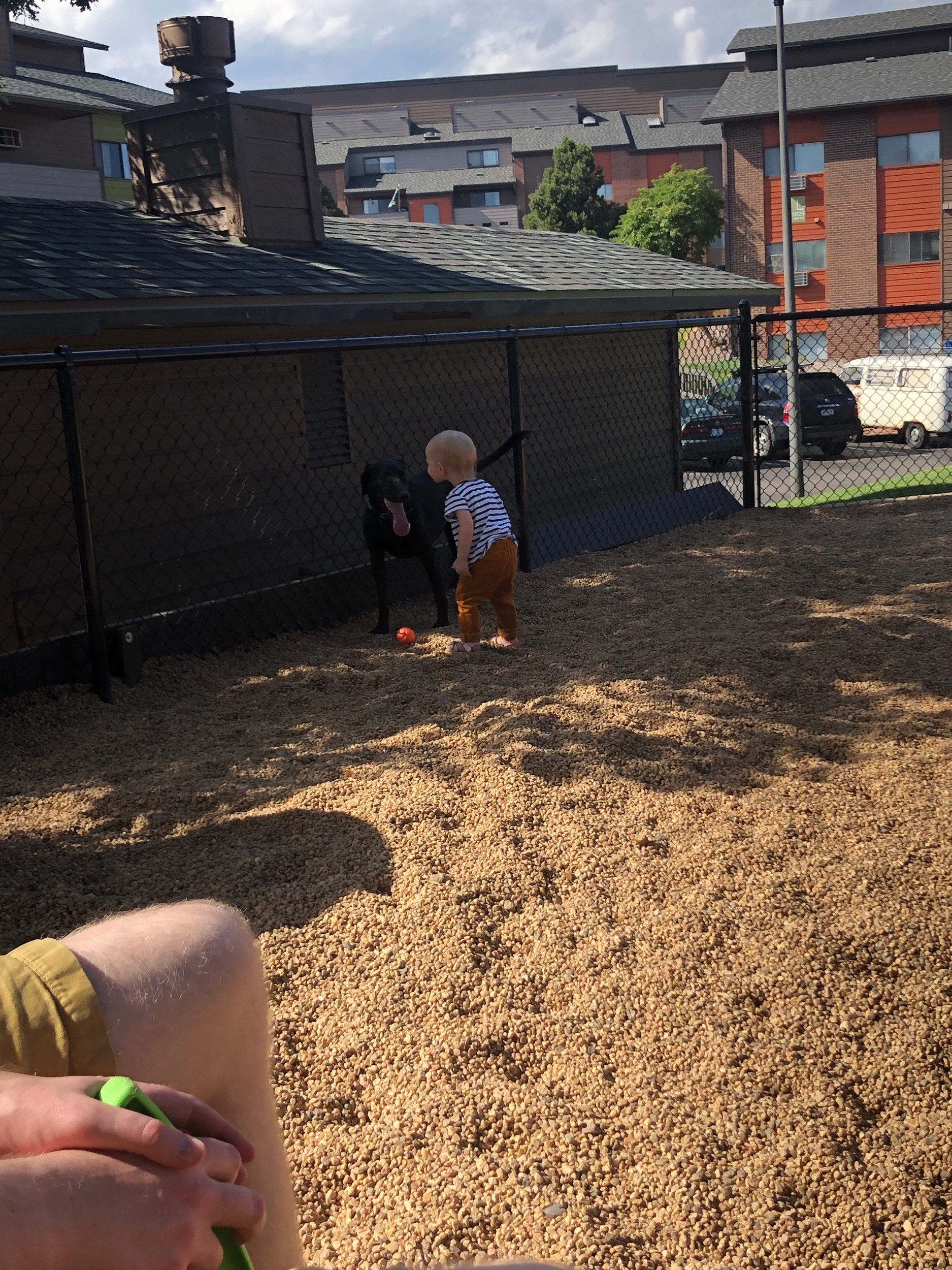 Von playing with Persephone at the dog park one day this week.
