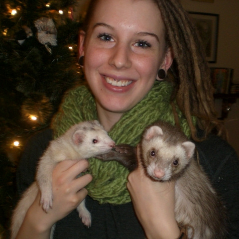 Laurae McIvor with two ferrets in front of a Christmas tree
